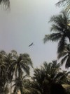 Thunderbird_in_kerala